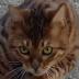 Xavier Guimard's avatar