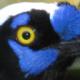 Florent Xicluna's avatar